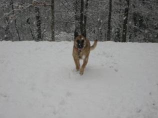 izzy in the snow