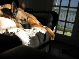 Izzy in the Sun